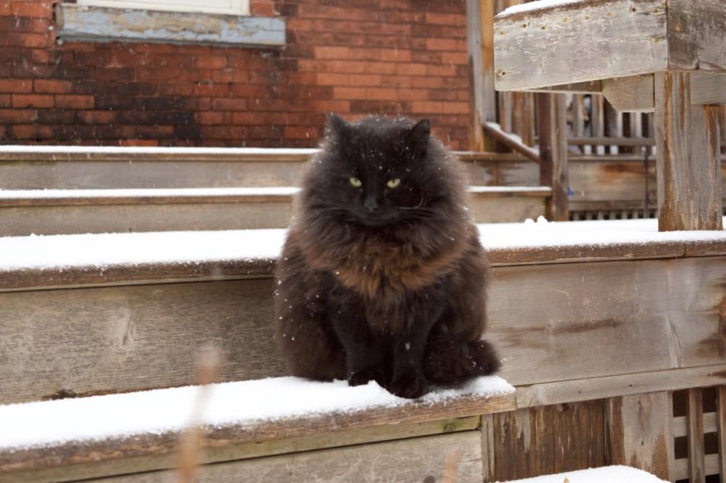 Charlie on the back deck